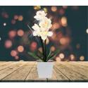 Lampe LED orchidée blanche dans pot carré